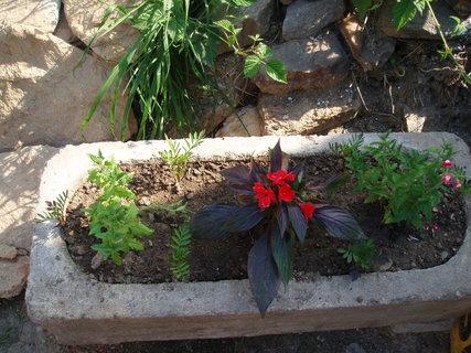 FOTKA - Květiny v kamenném korýtku