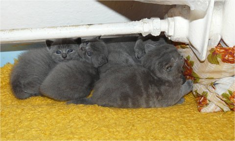 FOTKA - babicky kotatka