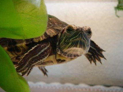 FOTKA - Naše vodní želvička