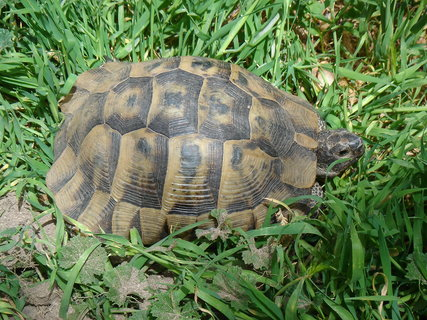 FOTKA - Želva ve volné přírodě