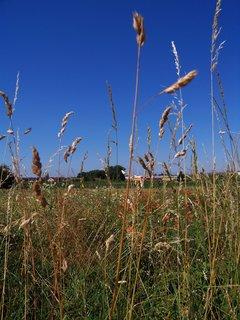 FOTKA - v polích  ............