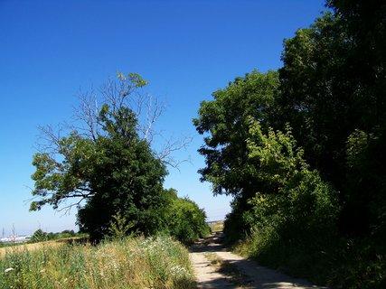 FOTKA - stromořadí s cestičkou...