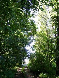 FOTKA - lesní cesta .,,,