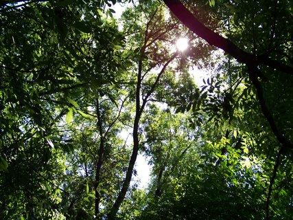 FOTKA - sluníčko v lese .,,,,,