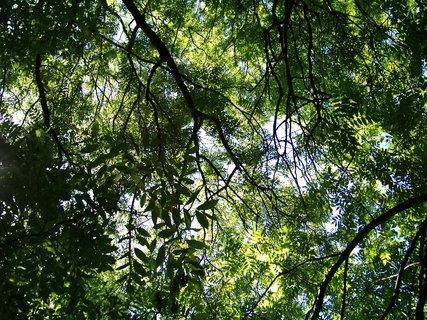 FOTKA - stromy .,.,.,.