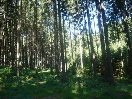 FOTKA - v lese u Domaňáku