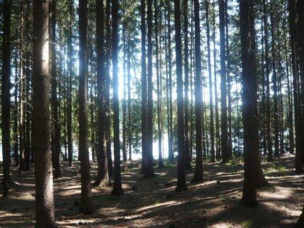 FOTKA - v lese u Domaňáku...