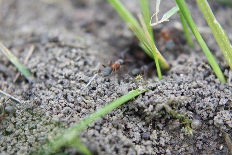 FOTKA - Mravenci I.