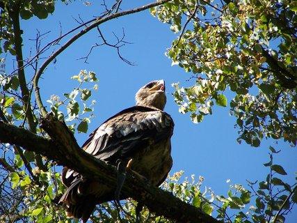 FOTKA - Žleby-ukázka a výcvik ptactva