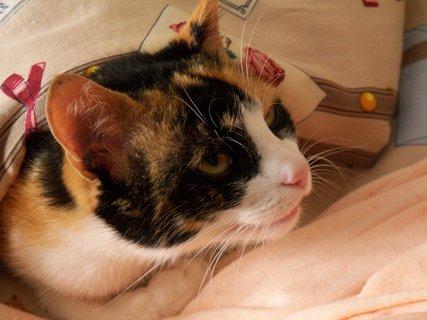 FOTKA - Přikrytá až po uši v babičině posteli