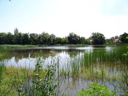FOTKA - dnešní vyjížďka na kole - rybník