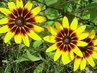 Květiny 24