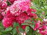 Květiny 26