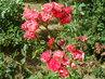 Květy 127