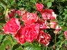 Květy 130