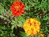 Květy 133