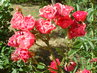 Květy 142