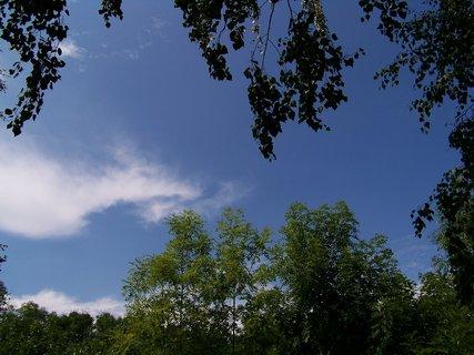 FOTKA - cestou na kole - stromy a nebe u rybníka