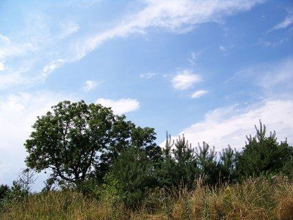 FOTKA - cestou na kole - stromky a obloha