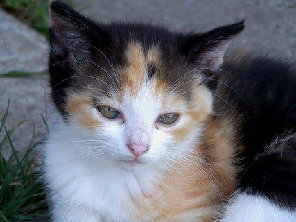 FOTKA - Jsem nejhodnější ze všech koťátek