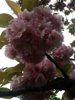 FOTKA - květiny,