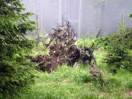 FOTKA - Vyvrácený kořen