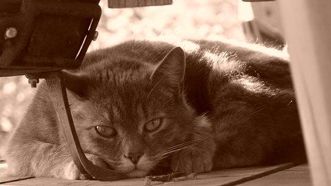 FOTKA - Chvíle odpočinku