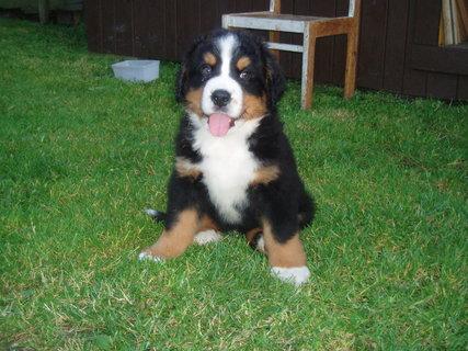 FOTKA - Max - nový člen rodiny
