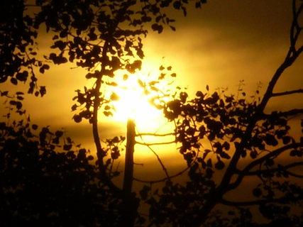 FOTKA - slunce za stromem