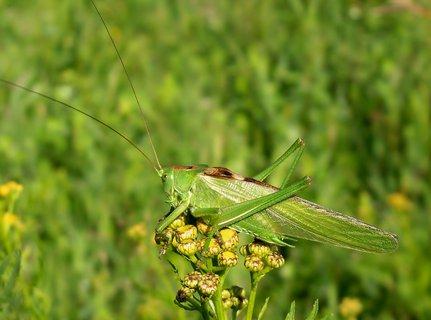 FOTKA - Kobylka brání svoji kytičku