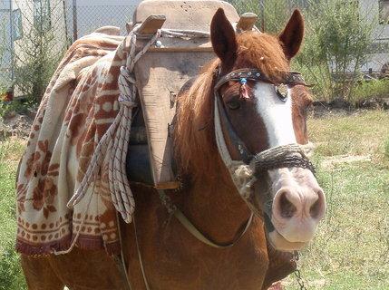 FOTKA - řecká mula