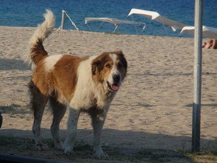 FOTKA - psi na pláži