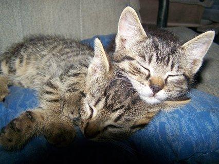 FOTKA - opět kočičky