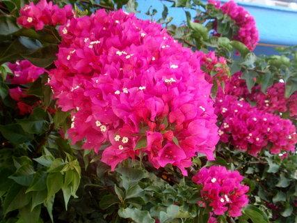 FOTKA - Řecká květena