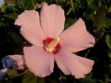 FOTKA - Řecká květena3