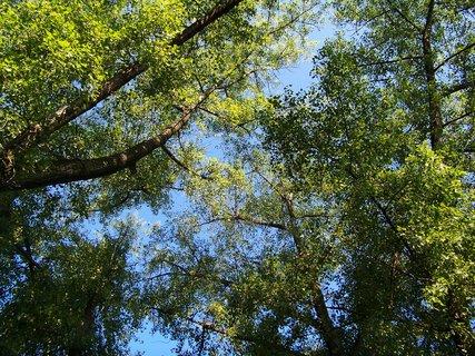 FOTKA - Buštěhrad_koruny stromů ..