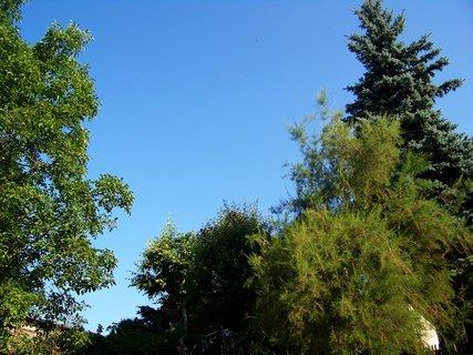 FOTKA - Buštěhrad_stromy u domu