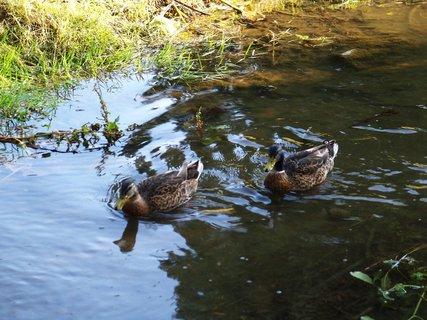 FOTKA - proti proudu _ mezi rybníky