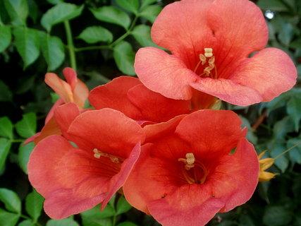 FOTKA - Řecká květena9