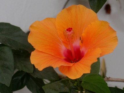 FOTKA - Řecká květena12