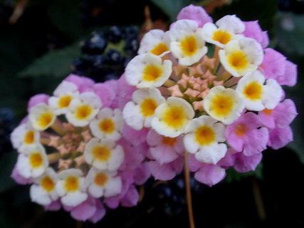 FOTKA - Řecká květena17