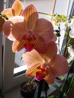 FOTKA - detail orchidee
