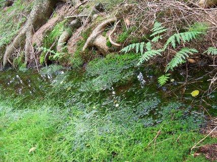 FOTKA - V lese je mokro ale houby nerostou