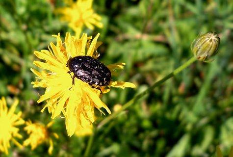 FOTKA - Hmyzák na obědě