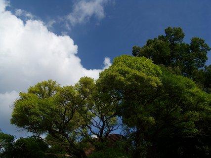 FOTKA - stromy u rybníka, Buštěhrad