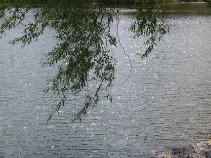 FOTKA - rybník v Buštěhradu ve slunci...