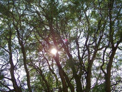 FOTKA - sluníčko ve vrbě...