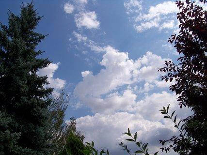 FOTKA - mraky mezi stromy na zahradě..