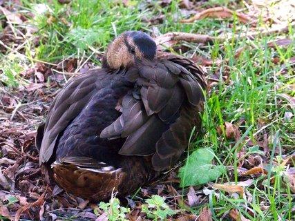 FOTKA - hezky se upravit _na břehu rybníku Buštěhrad