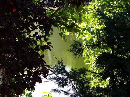 FOTKA - hladina rybníka schovaná za stromy zahrady...